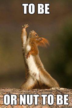 eekhoorn grappig