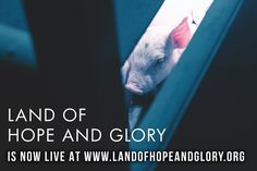Land of Hope and Glory is now LIVE! Watch now at www.landofhopeandglory.org and don't forget to share the film on all of your social media platforms. It's time for the truth to come out. #landofhopeandgloryfilm  #Regram via @landofhopeandgloryfilm Vegan Documentaries, Platforms, Forget, Coding, Social Media, Watch, Live, Compassion, Farms