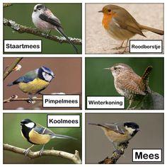 Vogels - New Ideas Fauna, Beast, Birds, Winter, Animals, Tumblr, Gardens, Pictures, Biology