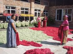 After the yarns (long-fiber Himalayan wool, in this case) are dyed, they are set out to dry. Then, woven into a beautiful hand knotted Tibetan rug from Silk Road Weaves.