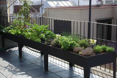 New Apartment Patio Garden Veggies Raised Beds 21 Ideas Balcony Herb Gardens, Apartment Patio Gardens, Apartment Plants, Balcony Gardening, Container Gardening, Apartment Ideas, Patio Plants, Balcony Plants, Potted Plants