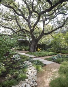 In landscape architect Christine Ten Eyck's Austin garden, decomposed granite walkways create a visual connection between stone pavers and planting beds.