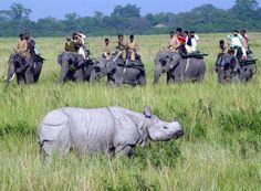 Kaziranga National Forest, Assam (India)