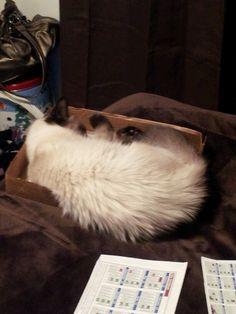 Sleepin in a box