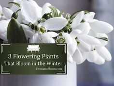 3 Flowering Plants that Bloom in the Winter From the Home Decor Discovery Community At www.DecoAndBloom.com