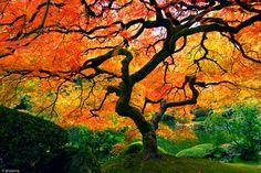 imagenes-arboles-de-otoño3