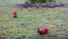 Zwei Eichhörnchen auf der Wiese im Februar - Jahreszeiten - Galerie - Community