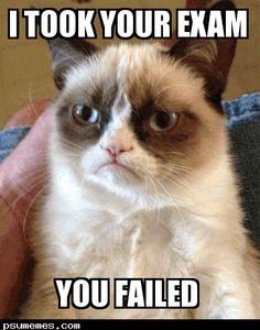 grumpy cat memes   grumpy cat on february 14 2013 by meme grumpy cat