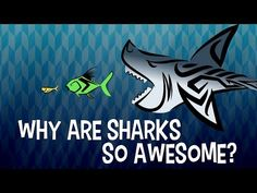 Sharks have been celebrated as powerful gods by some native cultures. And today, sharks       are recognized as apex predators of the world's ocean. What is it that       makes these fish worthy of our ancient legends and so successful in the       seas? Tierney Thys takes us into the ocean to find out.