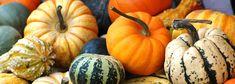 Courges & cie :: Nos courges d'hiver et citrouilles. Toutes les variétés nom par nom et leur utilisations.