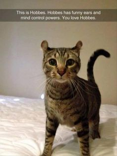 A Cat with Funny Ears and Mind Control Powers
