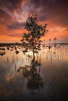 Stand Tall by John Kimwell Laluma.....  #sky #red #sea #sunset #water #reflection #beach #travel #blue #sun #coast #ocean #rocks #orange #life #sand #seascape #landscapes #philippines #seascapes