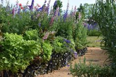 """whoa! wine bottle border!! SOME OF US are horticultural segregationists, designating one area as the """"flower garden"""" and another as the """"vegetable garden"""" or [read more…]"""