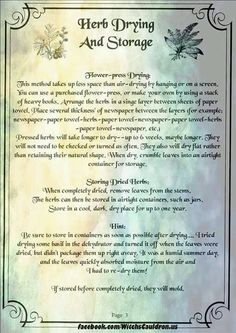 Herbs: Herb Drying and Storage Page 3 of Magic Herbs, Herbal Magic, Healing Herbs, Medicinal Plants, Ayurvedic Herbs, Natural Healing, Witch Herbs, Hedge Witch, Drying Herbs