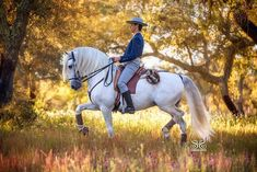 "Our trip to PORTUGAL was fantasic! Here is a photo I took of gorgeous Destino ridden by Carlos at . Photo by StunningSteeds with ""Discover the Lusitano with Serenata"" Conquistador, Equine Art, Equine Photography, Horse Head, Horse Breeds, Dressage, Beautiful Horses, Pretty Face, Baroque"