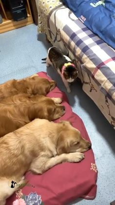 Cute Wild Animals, Cute Little Animals, Animals Beautiful, Animals And Pets, Cute Baby Dogs, Cute Dogs And Puppies, Doggies, Funny Cute Cats, Cute Funny Animals
