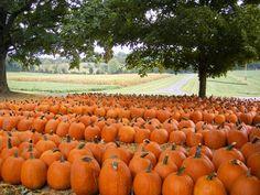 Boyd Pumpkin Patch, Clarksville, TN. Clarksville Tn, How To Clean Carpet, Pumpkin, Montgomery County, Nashville, Outdoor, Halloween, Fall, Places