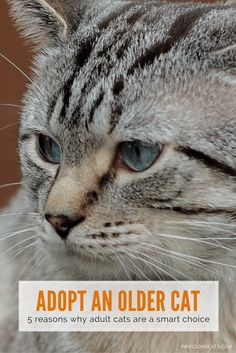 Whilst kittens are cute and adorable, there are advantages to adopting an adult or older cat | Five Reasons to Adopt an Older Cat