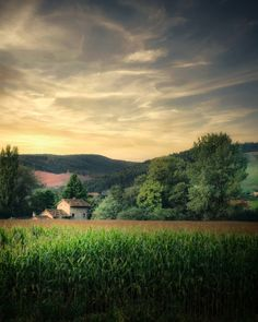 Staying Positive, Stay Strong, Mists, Vineyard, Sunrise, Beautiful Places, Nature, Fun, Outdoor