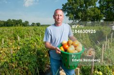 Stock Photo : by the basket