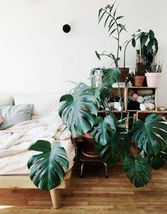 Så skapar du en grön oas inomhus – 7 växter att inreda med | Residence