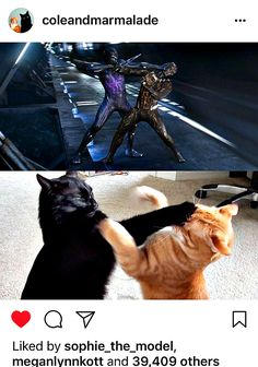 This is Thor and Loki too. Avengers Memes, Marvel Jokes, Marvel Funny, Marvel Dc Comics, Marvel Heroes, Marvel Avengers, Black Cat Adoption, Bucky Barnes, Loki