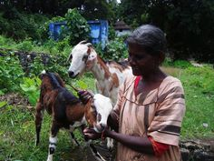 Shepherd, Kerala