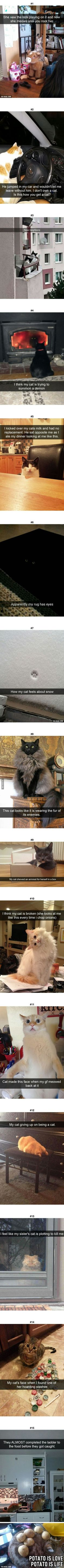 Luckily, my cats aren't like this!