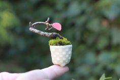 Super mini bonsai of Karin Seedlings 5 years position. I enjoy the simple- Super mini bonsai blog