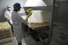 """""""culled chicks"""" as """"hatchery waste"""" - What a sickening industry!"""