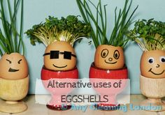 Surprising uses of eggshells
