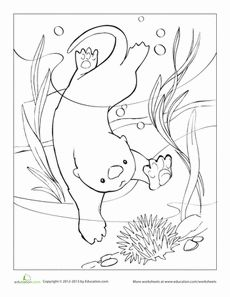 Sea Otter Eating Sea Urchin coloring page from Otters category