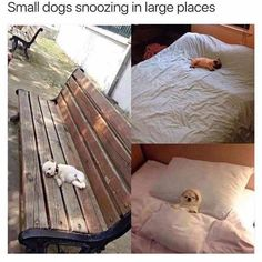 Funny Dog Pictures Dump of the Day - 14