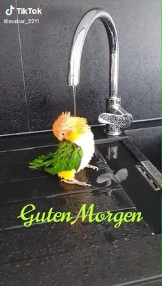 Good Night Gif, Good Morning Gif, Good Night Image, Latest Good Morning Images, Pet Birds, Cool Pictures, Beautiful Pictures, Funny Animals, Kricket