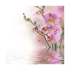 Beautiful Orchids In Water ❤ liked on Polyvore featuring backgrounds, flowers, floral and orchid