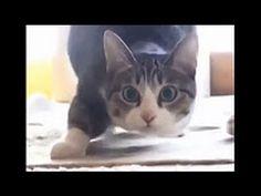 2016'nın En Komik Kedi Vine'ları