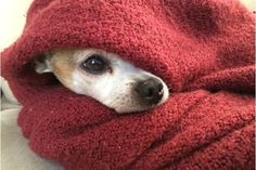 Home Remedies - How to Treat Your Dog's Upset Stomach at Home - Canine Campus Dog Daycare & Boarding ache food upset upset health upset remedies ache Best Dog Breeds, Best Dogs, O Nana, Dog Upset Stomach, Heated Dog Bed, Dog Shaking, Cute Couples Cuddling, Cute Animal Videos, Dog Daycare