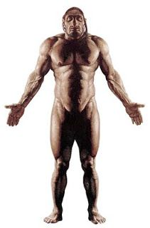 Neanderthal physique