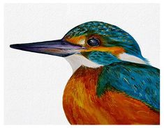 Kingfisher Bird Watercolour Painting A4 Signed Limited Edition Print Portrait #IllustrationArt