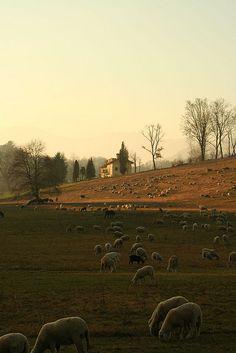 ~Valdengo, Biella, Piedmont, Italy~