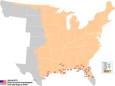 Hummingbird migration map. Track their progress north!