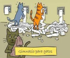 http://compartirvideos.es chiste grafico gimnasio gatos #compartirvideos #imagenesdivertidas