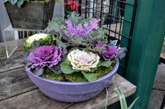 The Outlaw Gardener: Swanson's Nursery In December