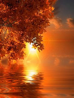 Autumn sunrise over the lake Beautiful Sunset, Beautiful World, Beautiful Places, Trees Beautiful, Autumn Scenery, Belle Photo, Pretty Pictures, Beautiful Landscapes, Wonders Of The World