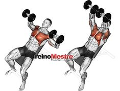 Dumbbell bench press while lying on an. Dumbbell bench press while lying on an incline bench. Exercising for bodybuilding. Target muscles are marked vector illustration Workout List, Gym Workout Tips, Dumbbell Workout, Pilates Workout, Cycling Workout, Sixpack Training, Body Training, Weight Training Workouts, Training Exercises