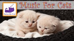 Sleep music for cats - IT WORKS relaxing music for stressed pets   Hey!  They need to relax too...LOL