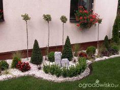 Ogród cioci czyli ciociogród :) - strona 11 - Forum ogrodnicze - Ogrodowisko