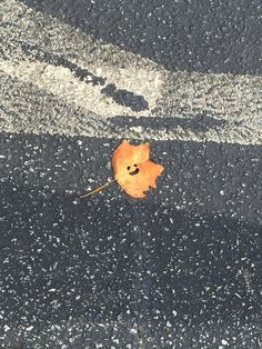 I found this happy leaf in the parking lot this morning, the first day of Fall.