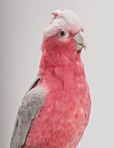 Image result for pink parrot