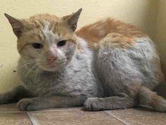 (43) NYC Urgent Cats - 03/27/2014 – Thursday NYC ACC Kill List